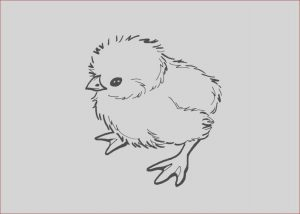Coloring Baby Chickens Beautiful Stock Baby Chick Drawing at Getdrawings