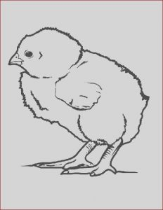 Coloring Baby Chickens Best Of Photography Little Baby Chick Coloring Page