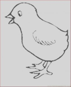 Coloring Baby Chickens Luxury Stock Baby Chick Drawing at Getdrawings
