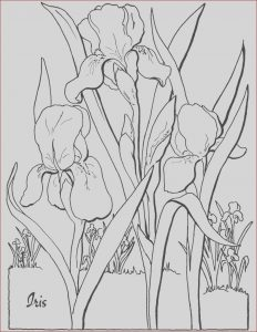 Coloring Pages Adult Free Best Of Collection Free Adult Floral Coloring Page the Graphics Fairy