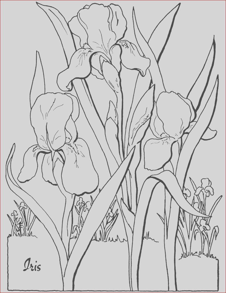 free adult floral coloring page