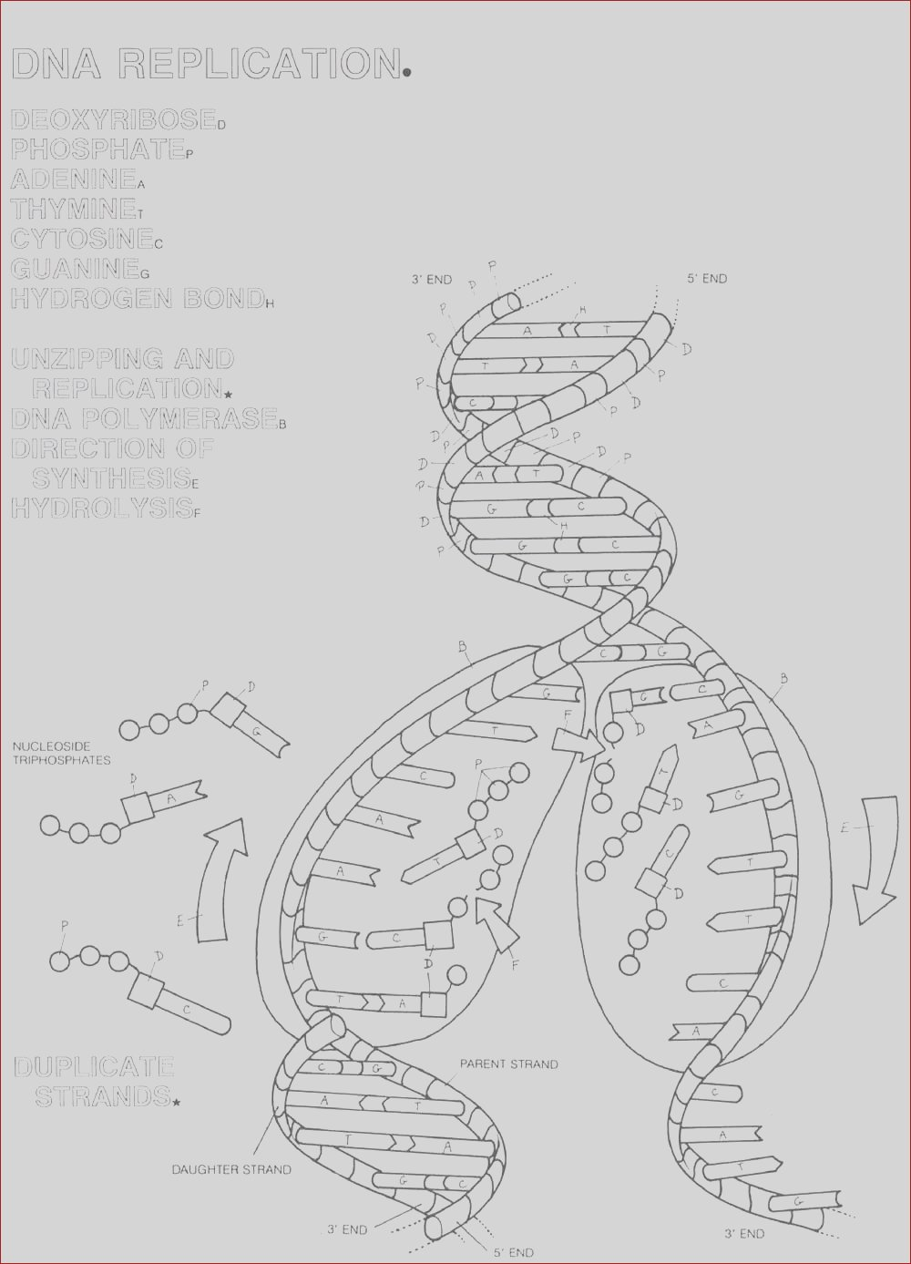 unit 4 dna structure replication protein synthesis transcription translation