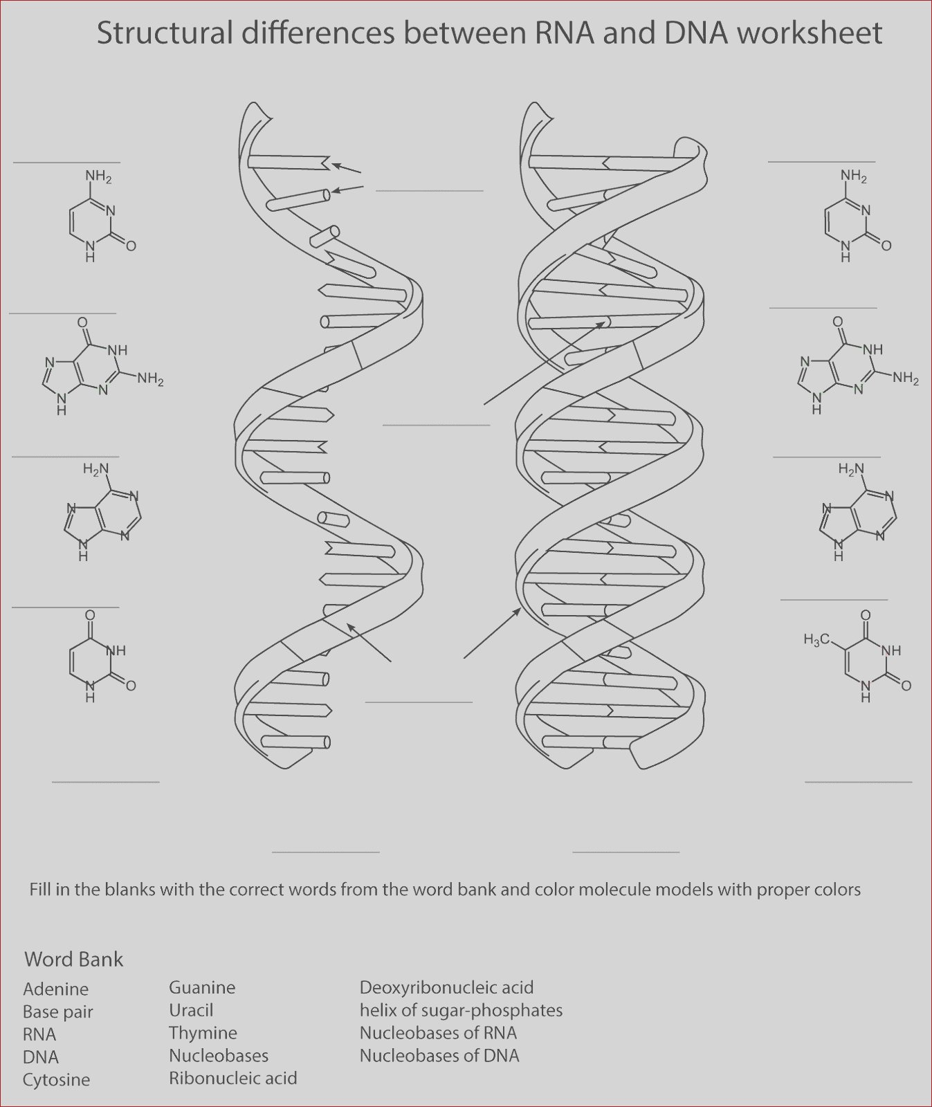 dna coloring transcription and translation activity