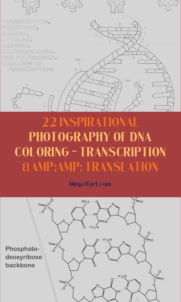 Dna Coloring - Transcription & Translation Inspirational Stock Dna Transcription Coloring Worksheet 84 Coloring Pages