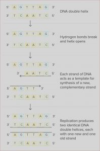 Dna Coloring Transcription and Translation Answer Key Awesome Image Restriction Enzyme Worksheet Answers