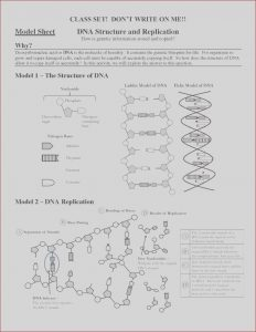 Dna Coloring Transcription and Translation Answer Key Awesome Photography 24 Dna Replication Coloring Worksheet Answer Key