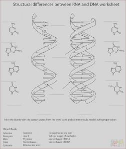 Dna Coloring Transcription and Translation Answer Key Beautiful Photos 17 Best Of Dna Worksheet Printable Dna Rna