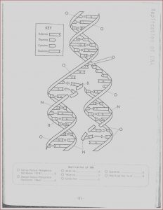 Dna Coloring Transcription and Translation Answer Key New Photos Dna Replication Coloring Worksheet On Dna Coloring