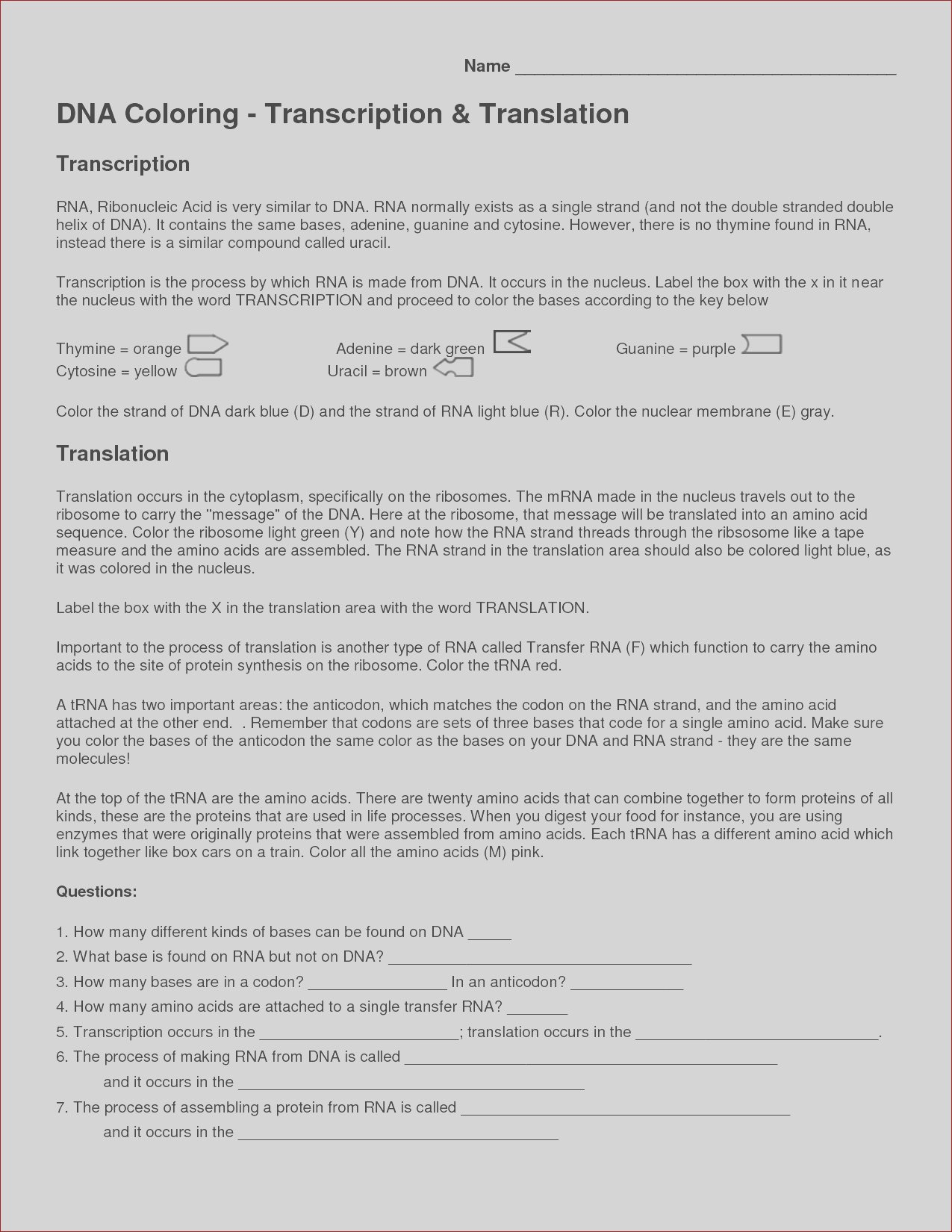 dna transcription and translation coloring worksheet answers