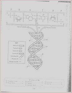 Dna Replication Coloring Worksheet Answer Key Beautiful Photos 17 Best Of Dna Worksheet Printable Dna Rna