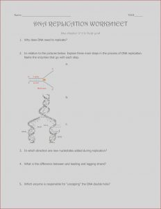 Dna Replication Coloring Worksheet Answer Key Luxury Stock Dna Replication Coloring 12 2 Answer Key