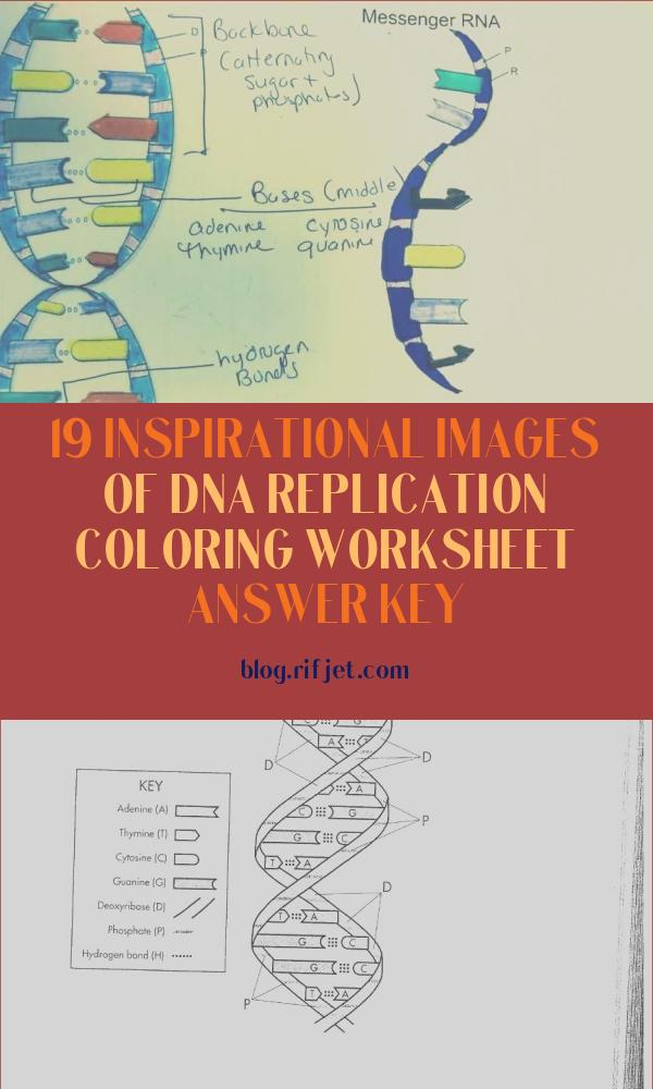 Dna Replication Coloring Worksheet Answer Key Unique Gallery Dna Structure and Replication Worksheet Answers Key