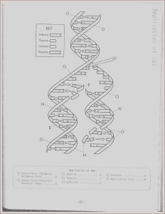 Dna - the Double Helix Coloring Worksheet Answers Awesome Image Dna Replication Coloring Worksheet On Dna Coloring