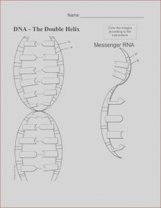 Dna the Double Helix Coloring Worksheet Answers Elegant Photos Dna Coloring