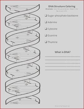 DNA Structure Double Helix Coloring Printable Worksheet