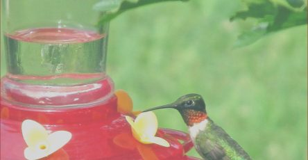 Does Food Coloring Hurt Hummingbirds Cool Photos Get Ready for Spring's Returning Hummingbirds