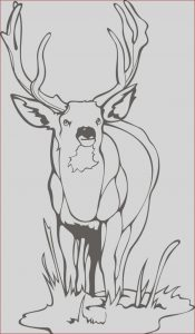 Free Coloring Images Unique Gallery Printable Deer Coloring Pages