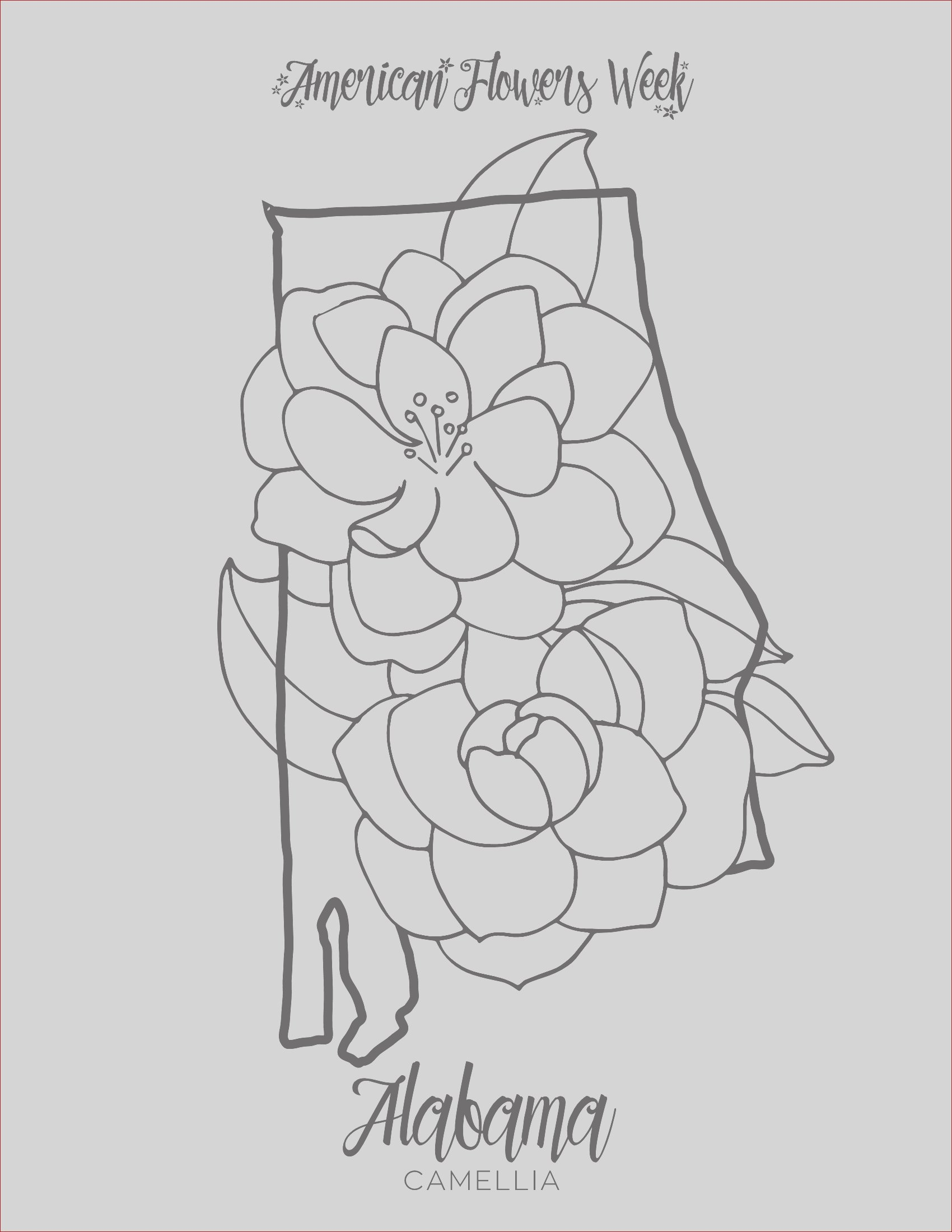 50 state flowers free coloring pages