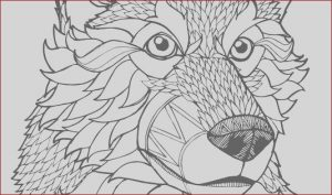 High Resolution Coloring Book Images Cool Gallery Print High Quality Wolf Mandala Adult Coloring Pages