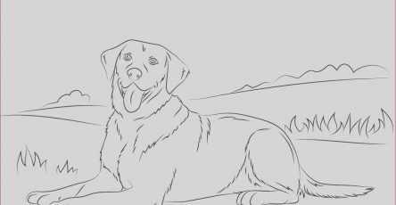 Labrador Coloring Beautiful Photography Labrador Retriever Coloring Page