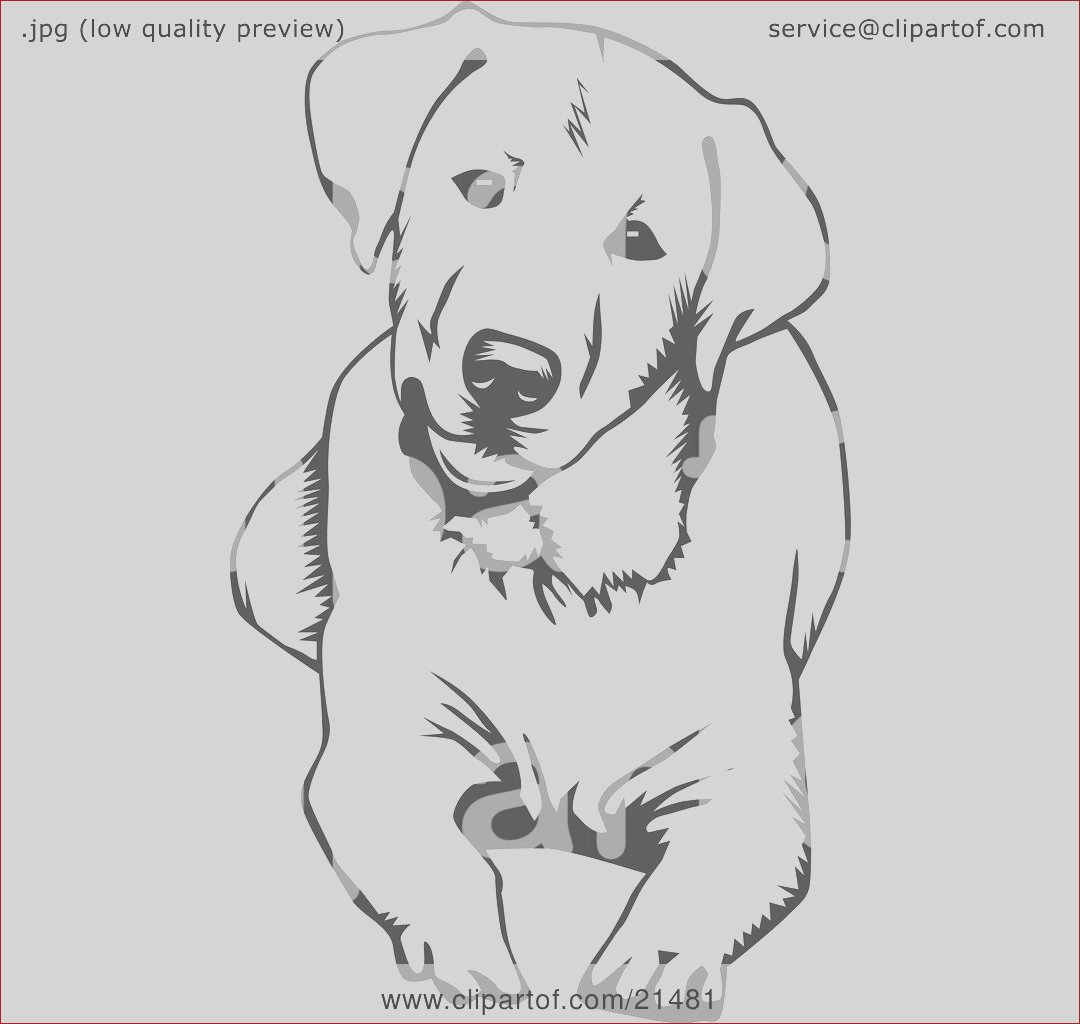 cute and curious labrador retriever dog lying down and tilting his head on a white background