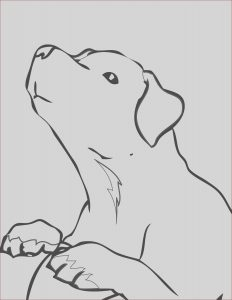 Labrador Coloring Best Of Photos the Best Free Labrador Drawing Images Download From 455