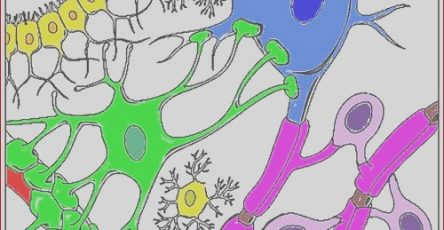 Nerve Cells Coloring Beautiful Image Nerve Cells Coloring Key