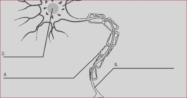 nerve cell sketch templates