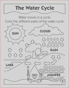 Photosynthesis Coloring Sheet Awesome Photography Synthesis Coloring Sheet Coloring Pages for Kids