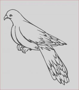 Printing Coloring Book Luxury Image Free Printable Pigeon Coloring Pages for Kids
