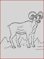 ram printable and coloring page