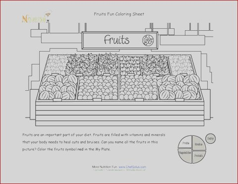 955 learning my plate fruits coloring page kids free printable farm to table