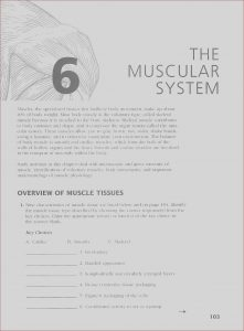 Anatomy and Physiology Coloring Workbook Answer Key Chapter 1 Best Of Images Anatomy and Physiology Coloring Workbook Answer Key Ch 8