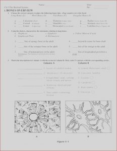Anatomy and Physiology Coloring Workbook Answer Key Chapter 1 Inspirational Photography Anatomy and Physiology Coloring Workbook Answers Chapter 5