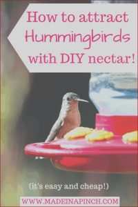 Does Red Food Coloring Hurt Hummingbirds Awesome Collection Try Making Homemade Hummingbird Food It S Easy
