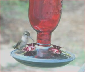 Does Red Food Coloring Hurt Hummingbirds Awesome Photos How to Make Homemade Hummingbird Nectar Recipe Going