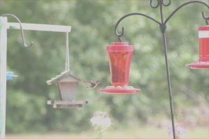 Does Red Food Coloring Hurt Hummingbirds Beautiful Gallery How to Make Hummingbird Nector Pour 1 Cup Of Water Into