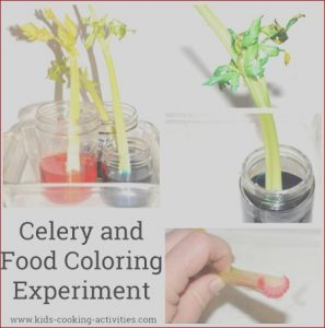 Food Coloring Facts Awesome Photos Celery Facts An Information Sheet for Kids Cooking