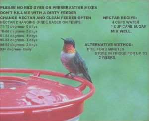 Is Food Coloring Safe for Hummingbirds Best Of Images Care Of Hummingbirds