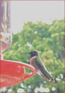 Is Food Coloring Safe for Hummingbirds Cool Photos 53 Trendy Homemade Humming Bird Feeder Food Coloring Food