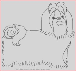 Shih Tzu Coloring Unique Photos Dog Breed Coloring Pages