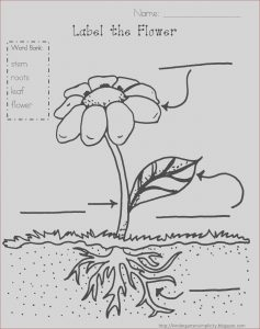 Stem Coloring Awesome Gallery Stem Coloring Pages at Getcolorings