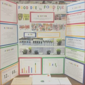 Food Coloring Science Project Awesome Photos Science Fair Project the Effect Of Food Dye On Living