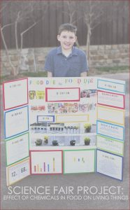 Food Coloring Science Project Beautiful Image Science Fair Project the Effect Of Food Dye On Living