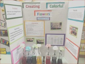 Food Coloring Science Project New Photos Food Coloring Science Fair Projects