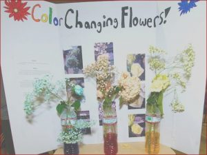 Food Coloring Science Projects Beautiful Collection Hms Students Discover Science Holloman Air force Base