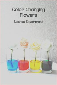 Food Coloring Science Projects Beautiful Images Color Changing Flowers Science Project