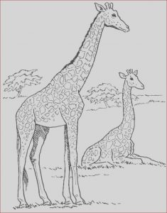 Girafe Coloring Unique Images Print & Download Giraffe Coloring Pages for Kids to Have Fun
