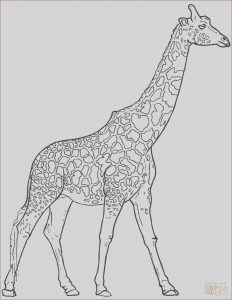 Girraffe Coloring Beautiful Collection Realistic Giraffe Coloring Page