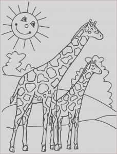 Girraffe Coloring Cool Collection Giraffes Coloring Pages to and Print for Free